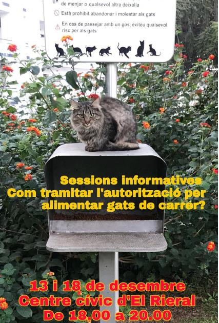 Sessions informatives tramitació autorització alimentador gats de carrer