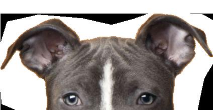 gos perillos